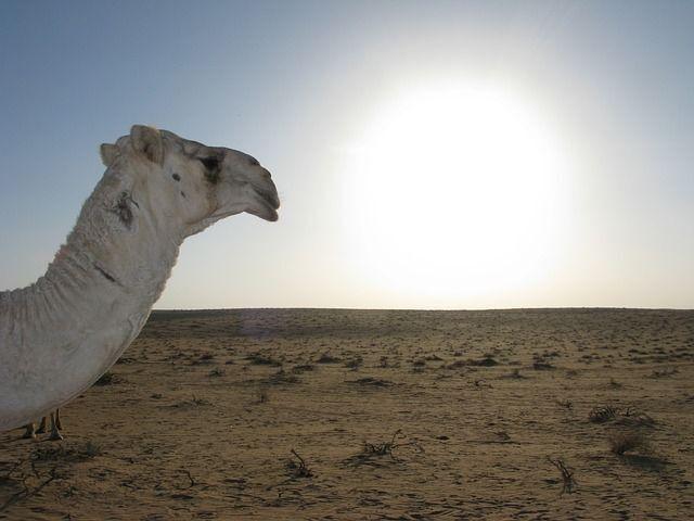 TARIFA ERROR: ¡¡¡VUELOS MADRID – ARABIA SAUDI POR 69EUROS!!!