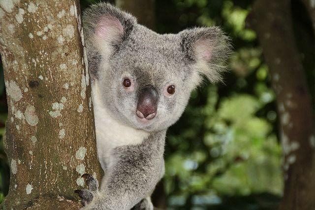 TARIFA ERROR: VUELOS A AUSTRALIA POR 470EUROS DESDE LONDRES